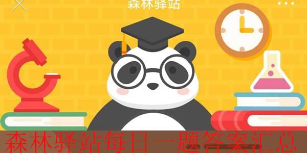 森林驿站大熊猫幼崽的体重大约只有妈妈体重的